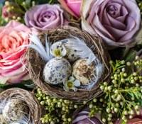 Laforêt – Chasse aux œufs