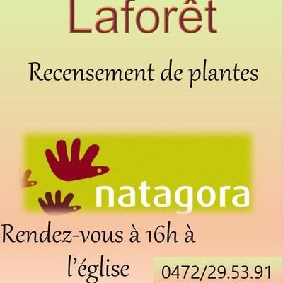 Laforêt – Recensement des plantes à la réserve naturelle « Le Gravier »
